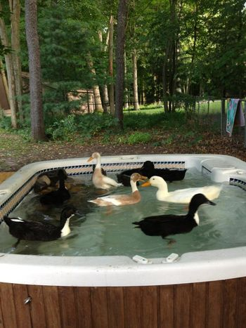 unique hot tubs part 2 backyards of america hot tubs